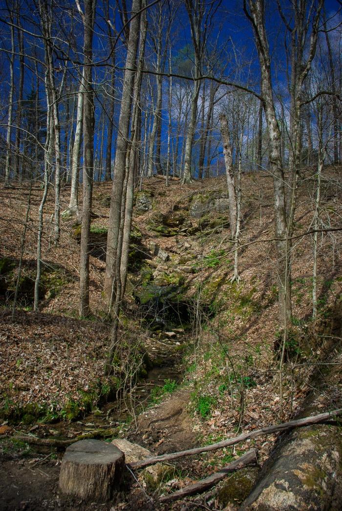 Mammoth Cave Sal HollowTrail